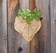 Ceramic Leaf Wall Pocket Large  Made with Real by SallysClay