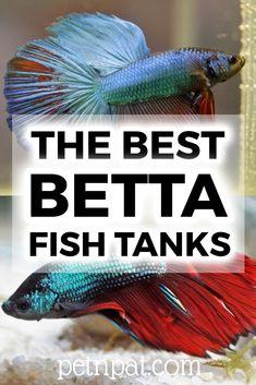 The Best Betta Fish Tanks & Betta Care Guide Pretty Fish, Cute Fish, Aquarium Fish Tank, Fish Tanks, Aquarium Stand, Fish Tank Themes, Aquarium Design, Aquarium Ideas, Fish Tank Stand