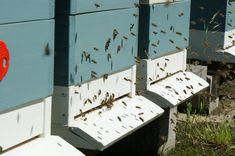 Včelín, včelí úl - Jakubovské včelařské krmítko Pictures