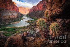 """Nankoweap Cactus"" by @photoinge on Fine Art America"
