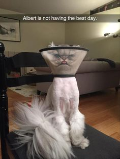 Some really good ones in this Funny Animals Dump A Day...like this one...Don't want to be next to him when the cone of shame comes off!
