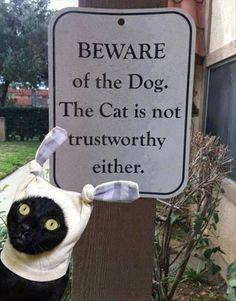 Funny Beware Dog Cat Trustworthy Sign Joke Picture