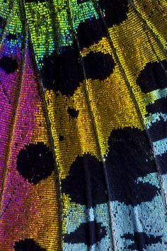 58 Ideas Photography Macro Texture Butterfly Wings For 2019 Moth Wings, Insect Wings, Macro Photography Tips, Amazing Photography, Micro Photography, Photography Portraits, Butterfly Pattern, Butterfly Wings, Patterns In Nature