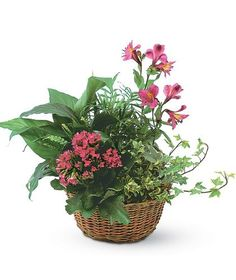 Garden Basket With Flowers Added-The European Garden beautifully combines flowering plants with green plants. This lovely, lasting gift is perfect for any occasion. #MissionViejoFlorist #Houseplants #IndoorPlants #GreenThumb #FlowerLover