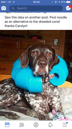 Cut pool noodle and fit around their widened collar. Inexpensive a… DIY Dog Cone. Cut pool noodle and fit around their widened collar. Inexpensive and easier on them. Diy Pour Chien, Canis, Diy Stuffed Animals, Dog Accessories, Dog Grooming, Grooming Salon, Doge, I Love Dogs, Pet Care