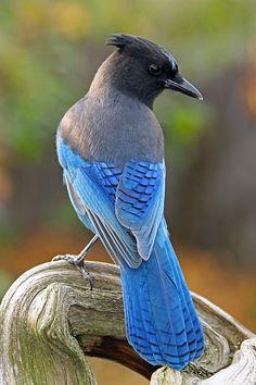 Birds World added a new photo. Tropical Birds, Exotic Birds, Colorful Birds, Pretty Birds, Beautiful Birds, Animals Beautiful, All Birds, Angry Birds, Tier Fotos