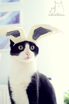 Smo as #easter #bunny / #cat