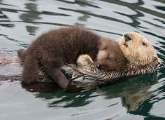 Baby otter sleeping