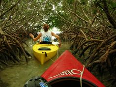Blue Planet Kayak Eco-Tours in Key West and the Florida Keys