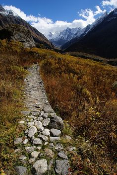 Deeper into the Valley of Flowers, Uttarakhand, India (by clara & james).