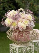 http://www.fioriweb.it/IBC/Dalie_33506%20(Custom).jpg