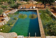 Natural Swimming Pool at Can Marti eco-resort, Ibiza Swimming Pool Pond, Natural Swimming Ponds, Natural Pond, Swimming Pool Designs, Piscina Diy, Piscina Do Hotel, Design Fonte, Design Design, Garden Pond Design
