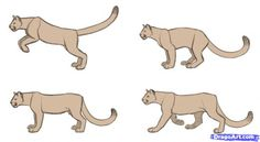 Step 13. How to Draw Cougars, Mountain Lion