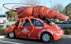 Lobster bug