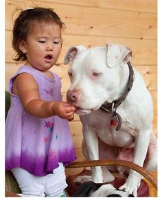 and they are called horrifying? My pit takes tiny bits of food from my hand so gentle ... just like this