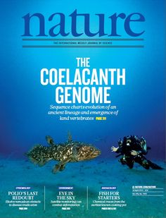 Nature, Volume 496 Number 7445. An African coelacanth and diver photographed by Laurent Ballesta in Sodwana Bay, South Africa. cCelacanths were thought to have gone extinct 70 million years ago. Now its genome has been sequenced. Cover: Laurent Ballesta/Andromède Collection #evolution #genome Nature Publishing Group Living Fossil, Magazine Titles, Science, Vertebrates, Marine Life, Archaeology, Evolution, Cover, Nature