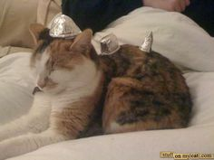 War Cat preparing for battle...