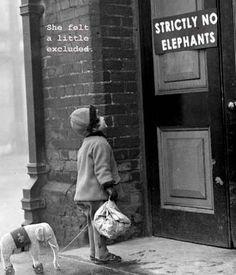 I ❤ elephants.