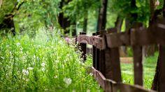 забор, трава, лето, природа