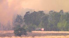 Heidebrand in Hoge Veluwe