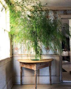 Asparagus—an unexpectedly beautiful centerpiece. Asparagus Plant, Flora Botanica, True Botanicals, Centerpieces, Table Decorations, Flower Images, Outdoor Furniture, Outdoor Decor, Houseplants
