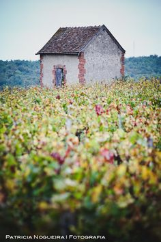 Loire Valley in France. Ohhh solitude. And you're surrounded by fields of flowers. YAY.