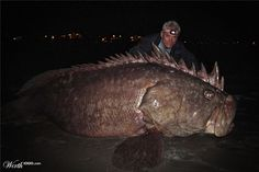Goliath, The River Monster! - please tell me this is fake! Makes me wonder what is in water . Real: that's Jeremy Wade behind it. River Monsters, Sea Monsters, Cool Fish, Big Fish, Scary Fish, Giant Fish, Big Animals, Rare Animals, Ocean Creatures