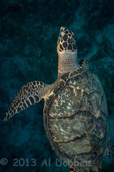 14 Best Live Turtle & Tortoise Museum images in 2012