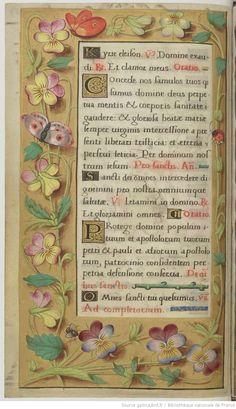 Calligraphy Doodles, Islamic Art Calligraphy, Calligraphy Alphabet, Medieval Books, Medieval Manuscript, Illuminated Letters, Illuminated Manuscript, Nature Illustration, Botanical Illustration