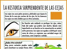 CIENCIAS PARA TODOS Ficha nº 2: La historia sorprendente de las cejas. Incluye comprensión lectora.