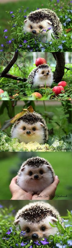 This is like the happiest hedgehog ever.
