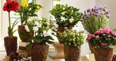flowering plants 10 unconventional takes on classic mother s day gifts . Rubrics, Planting Flowers, Flowering Plants, Funguje To, Gardening, Classic, Google, Gifts, Plant