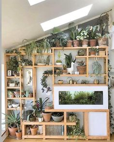 Precious Tips for Outdoor Gardens In general, almost half of the houses in the world… Indoor Plant Wall, Indoor Garden, Indoor Plants, Indoor Plant Shelves, Room With Plants, House Plants Decor, Shelves With Plants, Plant Rooms, Plantas Indoor