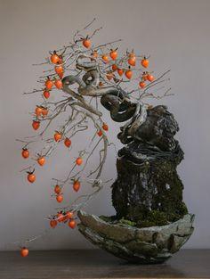 老鴉柿(老爺柿、別名:姫柿)の盆栽 bonsai on the rock