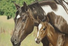 Looking Out For Me Helen Bailey  Colored Pencil Art