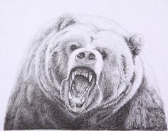 grizzly bear charcoal drawing print wildlife fine art 11x14