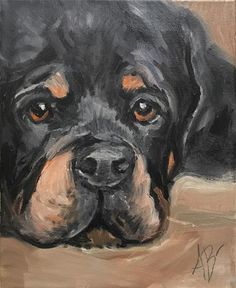"Daily Paintworks - ""Rottweiler puppy eyes"" - Original Fine Art for Sale - © Annette Balesteri"
