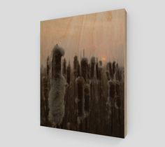 Wood Print: Typha Cat tails, available in Hahnemuhle or Wood print.  https://www.studioshim.ca/collections/wall-art/products/sustainable-woodprint-typha