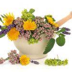 bitkisel tedaviler