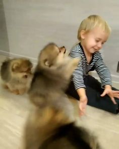 You will never be as happy as this little boy 😍😂 Excited Puppies Jumping All Over Little Boy facebook video from the author of UNILAD