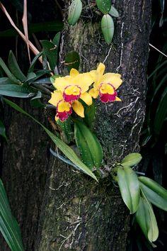 Dicas para cuidar das orquídeas