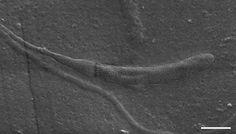 50-Million-Year-Old Sperm Cell Found in Antarctica