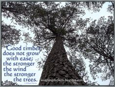 The tree that never had to fight  For sun and sky and air and light  That grew out in the open plain  And always got its share of rain  Never became a forest king  But lived and died a scrappy thing  Good timber does not grow with ease  The stronger wind, the stronger trees...