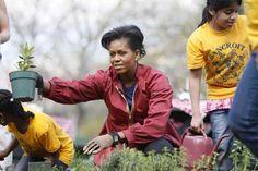 Michelle Obama in anul trecut martie plantand legume si ierburi aromatice in gradina de la Casa Alba