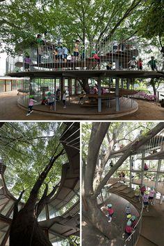 This Japanese Kindergarten Is Built Around A Tree