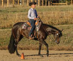 Barrel Racing Saddles, Barrel Racing Horses, Barrel Horse, Horse Stalls, Horse Barns, My Horse, Western Pleasure Horses, Western Horse Tack, Western Saddles
