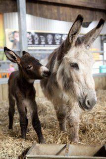 mum & baby donkey <3