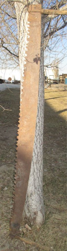 2 Broad Belly Two Man Cross Cut Saws Tree Blade by TheOldGrainery