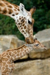 mother and baby animal pictures - Woman And Home