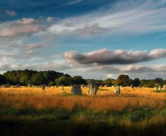 Celtic.Safari   Flickr - Photo Sharing!